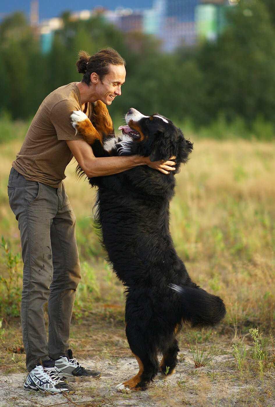 Sont-ils protégés par des chiens de montagne à Berne?