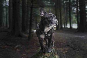Choisir un harnais pour son chien