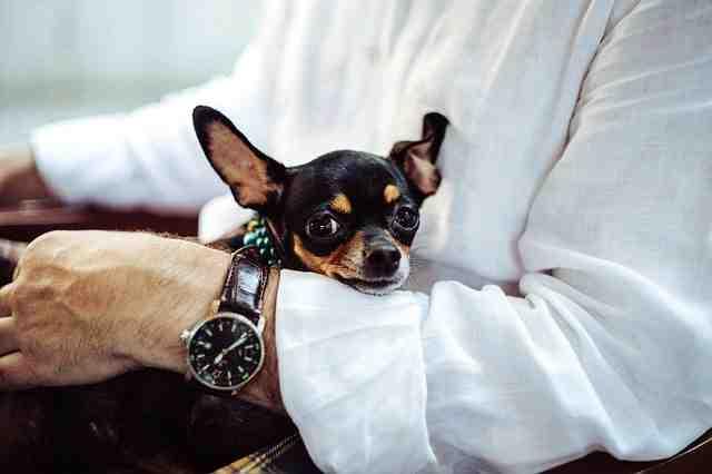 Comment faire pour que votre chien vous aime