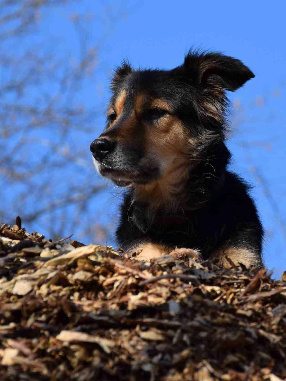 Comment prendre soin des chiens de montagne bernois?
