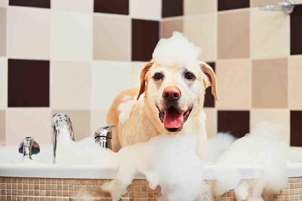 Quel produit naturel pour laver son chien ?