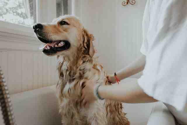 Combien de temps dure un toilettage pour chien