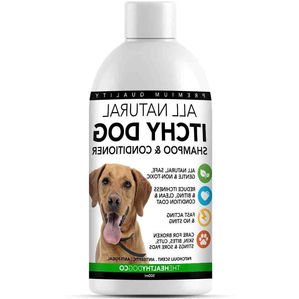 Comment faire un shampoing naturel pour chien