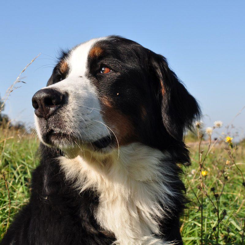 dog-1183475_1920